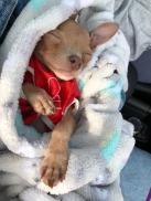 elio puppy
