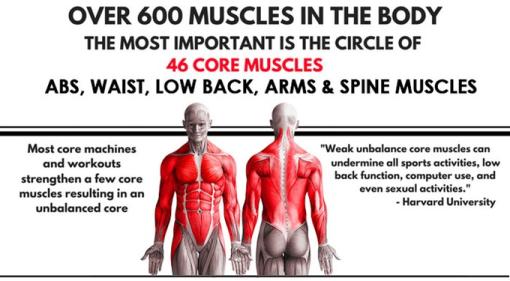 core body